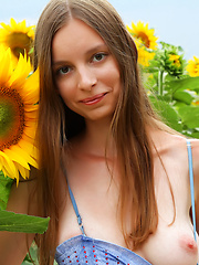Admirable teen girl stripping clothes and showing attractive body in a field of sunflowers.